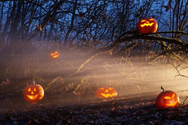 Хэллоуин тыквы в ночном лесу