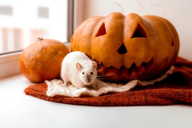 ハロウィーンのネズミとカボチャハロウィーンの装飾的なネズミの秋の色のためのネズミとカボチャ