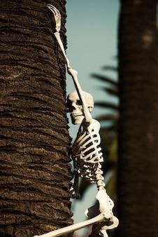 Halloween skeleton. helloween for house decor. halloween skeleton climbing on tree.