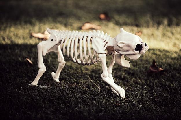 Скелет страшной собаки на хэллоуин. концепция хэллоуина.