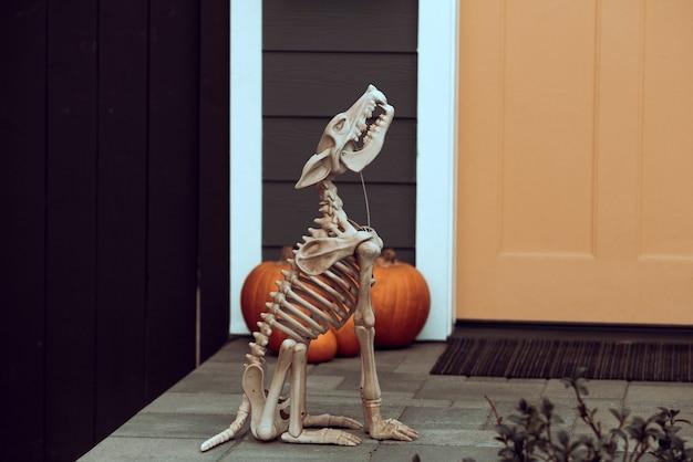 Скелет страшной собаки на хэллоуин. украшение хэллоуина со скелетами и тыквами.