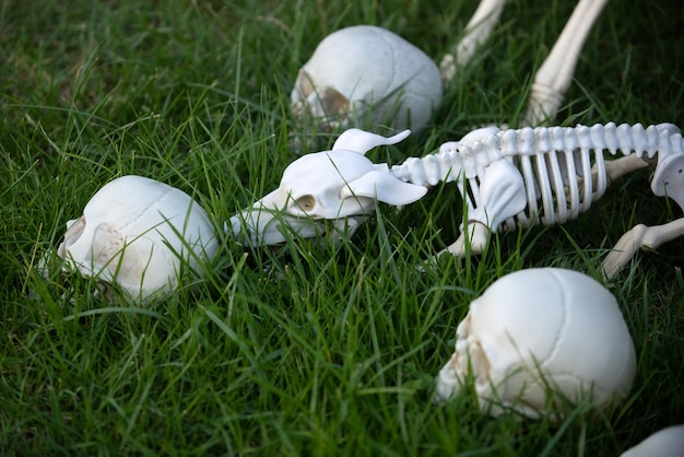 Halloween skeleton of scary dog, skull rising out from the ground.