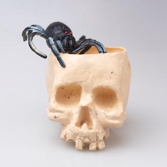 Halloween skull on white background