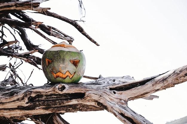 Символ хэллоуина, вырезанный из молодого зеленого кокоса страшное лицо, похожее на тыкву, на ветвях дерева