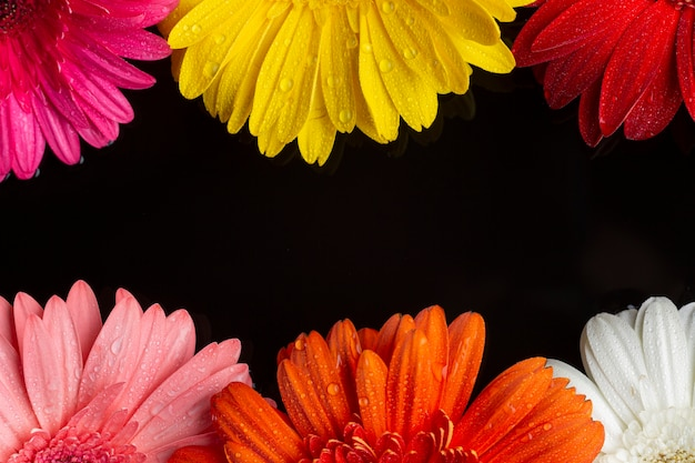 Halves of gerbera daisy flowers on black background