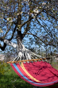Hammock under a flowering tree. blooming cherry in the garden. relax. summer and spring vacation.
