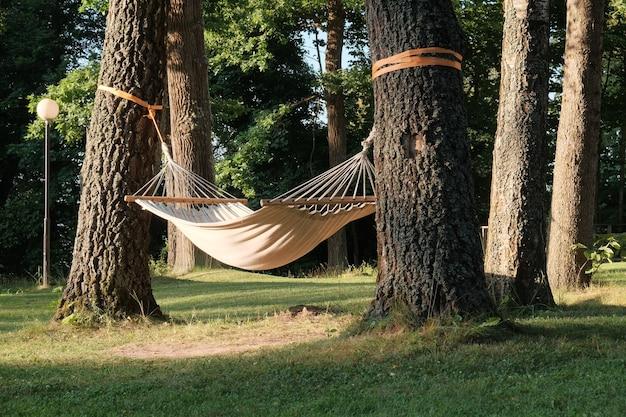 여름 화창한 날에 아름다운 숲에 있는 나무 사이에 해먹이 매달려 있습니다. 사람 없는 사진.