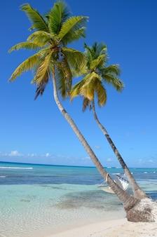 ビーチのヤシの木のハンモック