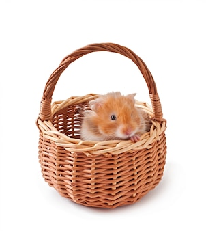 Hamster in a basket isolated on a white table