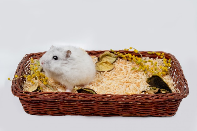 Hamster in a basket not a white background