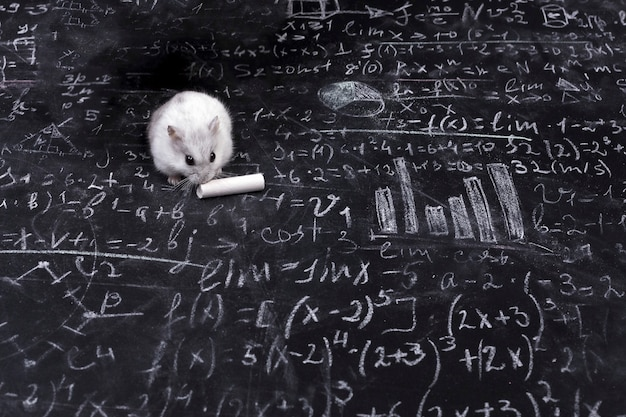 Hamster and science