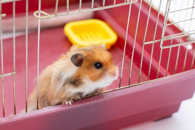 ハムスターはまだ檻の中に座っています