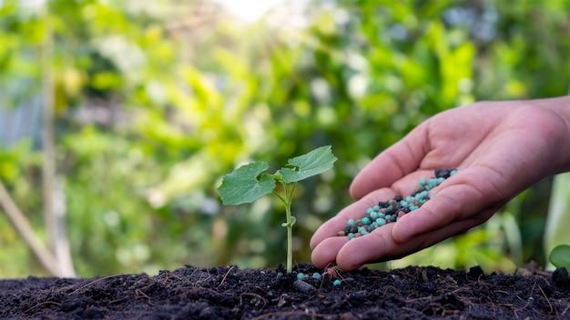 손과 식물 배경이 흐린 토양에서 자라는 작은 식물