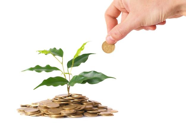 コインから成長する手と緑の植物。お金の財務概念。