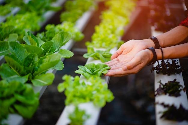 Салат из рук и зелени, нетоксичные овощи концепция здорового овоща