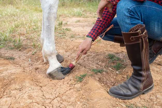 Hand of anonymous man using brush to smear wax on hoof of white horse on ranch