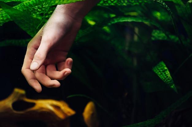 Hand in aquarium algae background