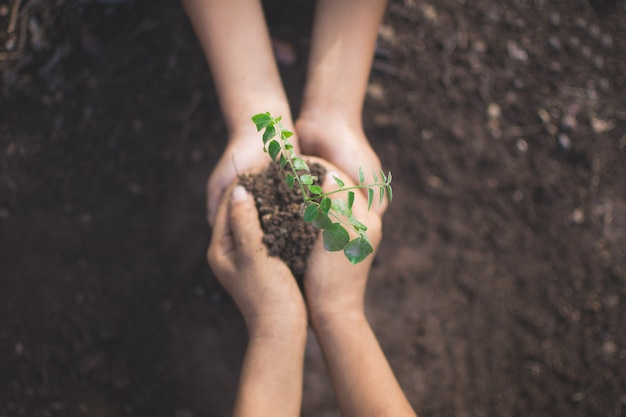 Hand of children holding plant and soil with bokeh and nature background