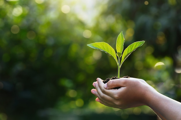Hand children holding young plant with sunlight on green nature. concept eco earth day