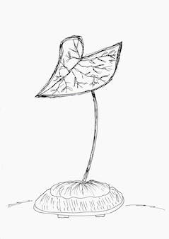 Hand drawith of single caladium plant with black ink,on white paper