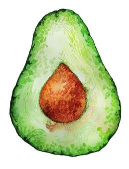 Hand drawn avocado fruit vegan watercolor isolated on white painting background wet brush wash illus...