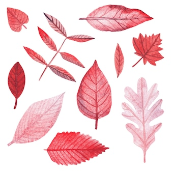 手描きの青とピンクの水彩画の枝、葉、星。装飾用の明るい花と葉のセット
