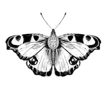 白い背景の上の手描きの蝶のイラスト。