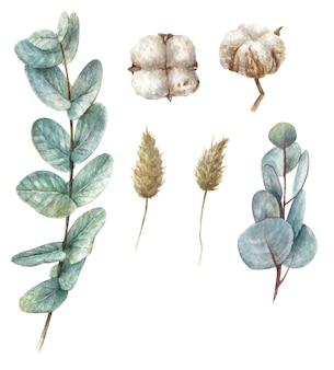 Нарисованные вручную ветки эвкалипта, хлопок и засушенные цветы