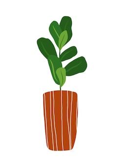 白い背景で隔離の手描きのイチジククリップアート。ポットイラストのカシワバゴムノキ。観葉植物のクリップアート。鉢植えの花のデザイン要素。