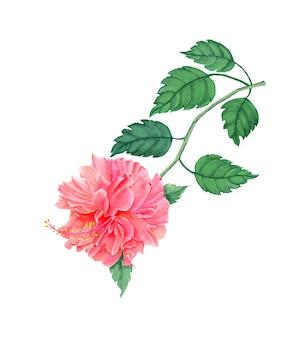 Рисованный цветок на белом фоне
