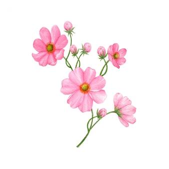 Нарисованные от руки цветы на белом фоне
