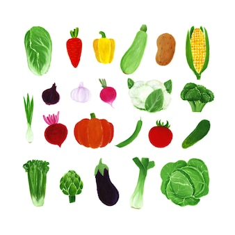 Hand drawn gouache vegetables isolated on a white. illustration for kids