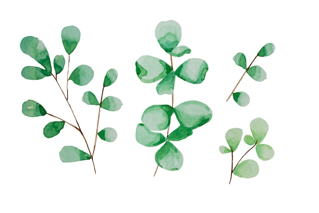 Hand drawn leaves, watercolor illustration. green and blue spring, easter botanical element.