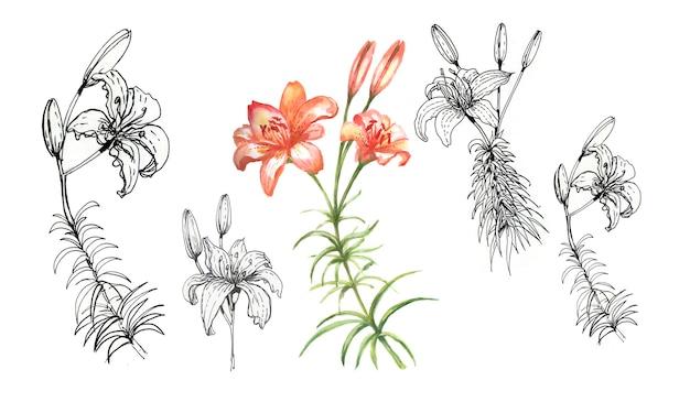 手描きのユリの花セット