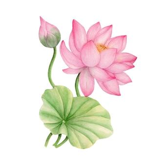 녹색 잎을 가진 화려한 꽃의 손으로 그린