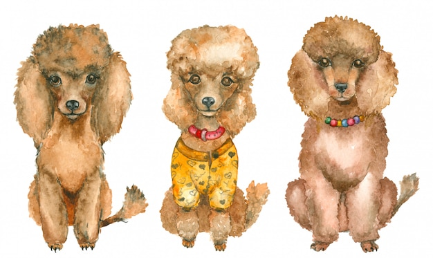 Hand drawn poodles