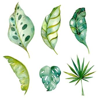 手描きの熱帯の葉水彩画は白で隔離緑のヤシシダモンステラエキゾチックな葉のセット