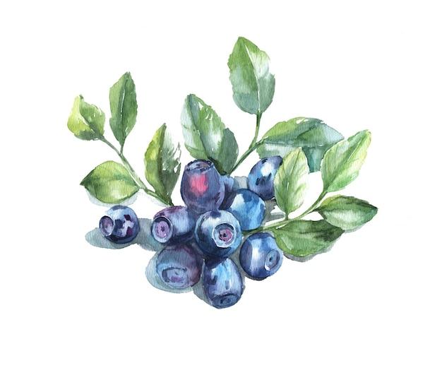 白い背景の葉と手描きの水彩ブルーベリー