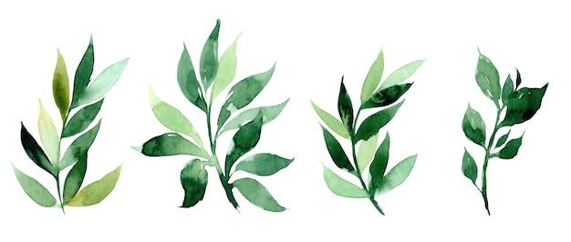 手は、抽象的な緑の枝の水彩イラストを描いた。招待状、映画のポスター、生地、その他のオブジェクトのデザインの要素