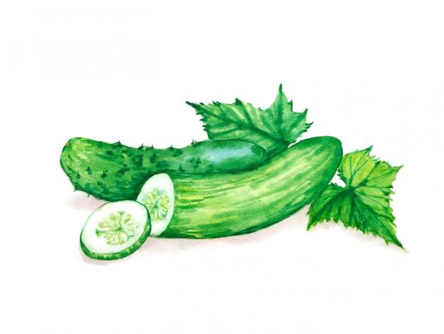 葉と新鮮な緑のキュウリの手描き水彩イラスト。ベジタリアン食品