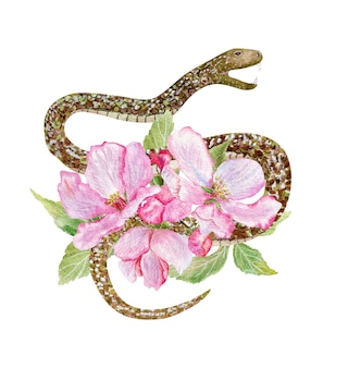 ピンクのリンゴの花と白で隔離のヘビの手描き水彩イラスト。
