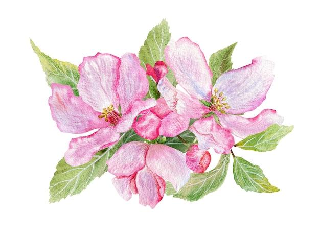 고립 된 핑크 사과 꽃의 손으로 그린 수채화 그림. 초대장 및 직물을위한 디자인 요소