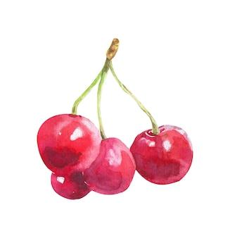 Ручной обращается акварель вишня на белой поверхности. иллюстрация ягод