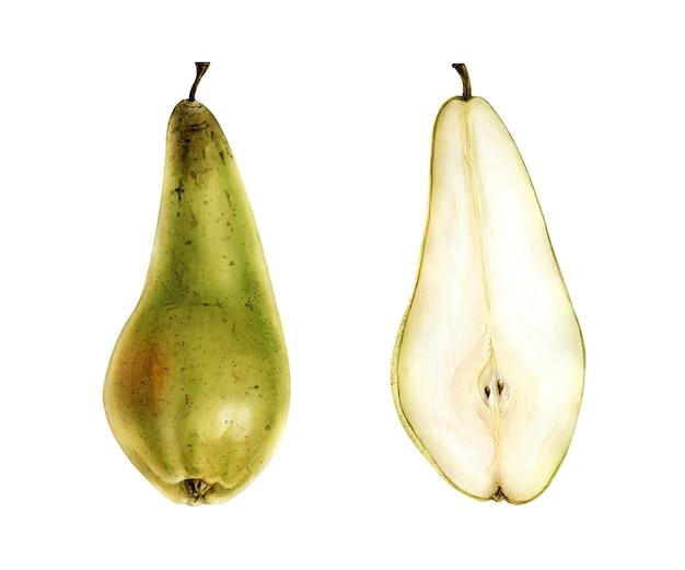 白い背景の上の手描きの水彩梨