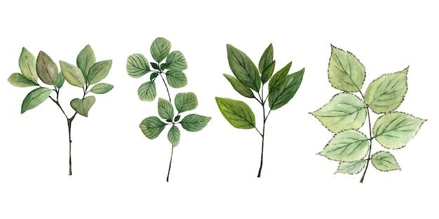녹색 잎 분 지의 손으로 그린 수채화 세트