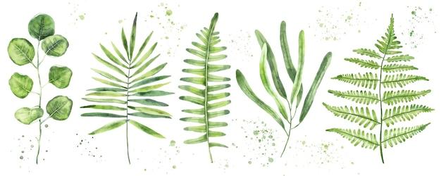 緑の葉と枝の手描き水彩セット。花のデザイン要素
