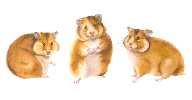 Hand drawn watercolor set of realistic hamsters