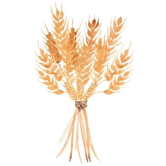 手描き水彩黄色小麦耳花束イラスト。