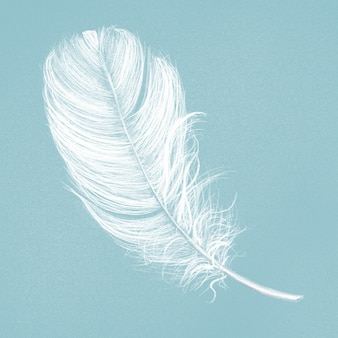 Hand drawn white feather on blue background