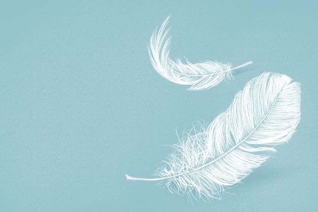 파란색 배경에 손으로 그린 화이트 깃털